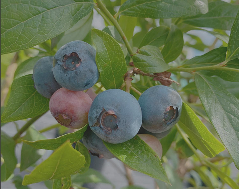 子どもと大人が笑顔で会話している画像