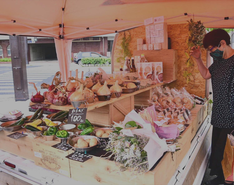 野の花の画像